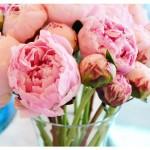 flores_019