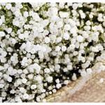 flores_032