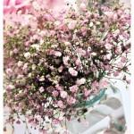 flores_038