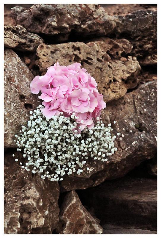 flores_041