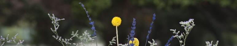 flores_icono